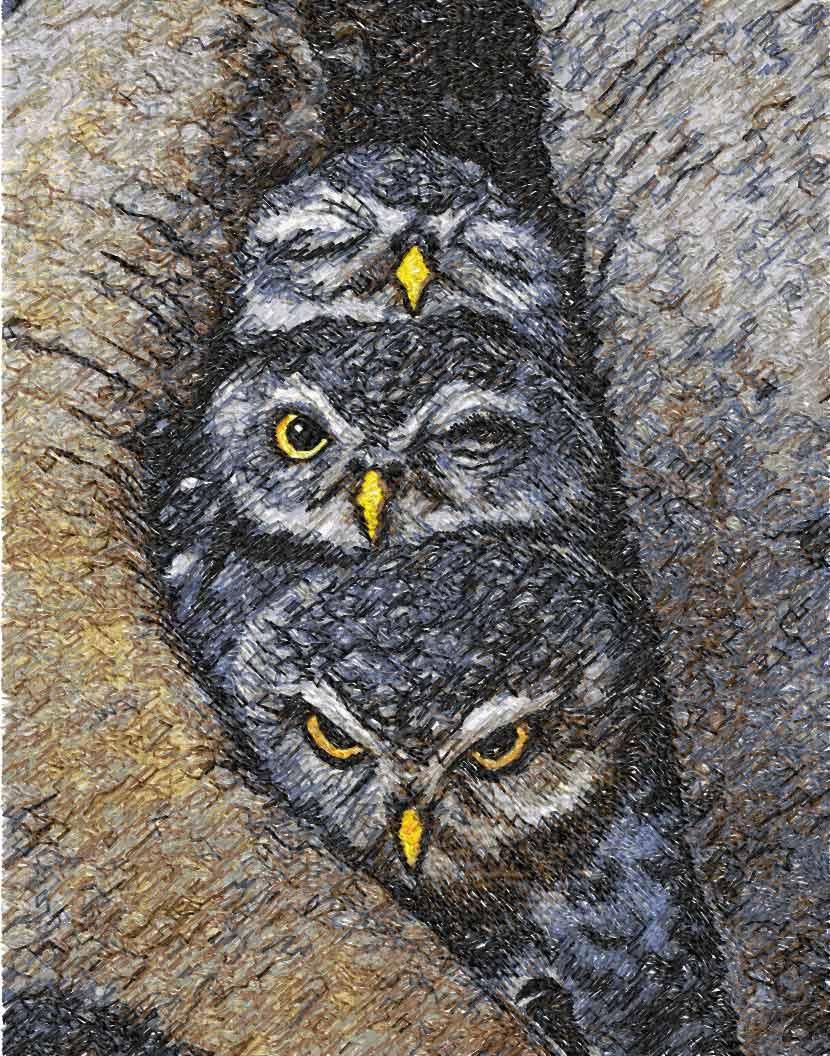 Cute small owls photo stitch free embroidery design