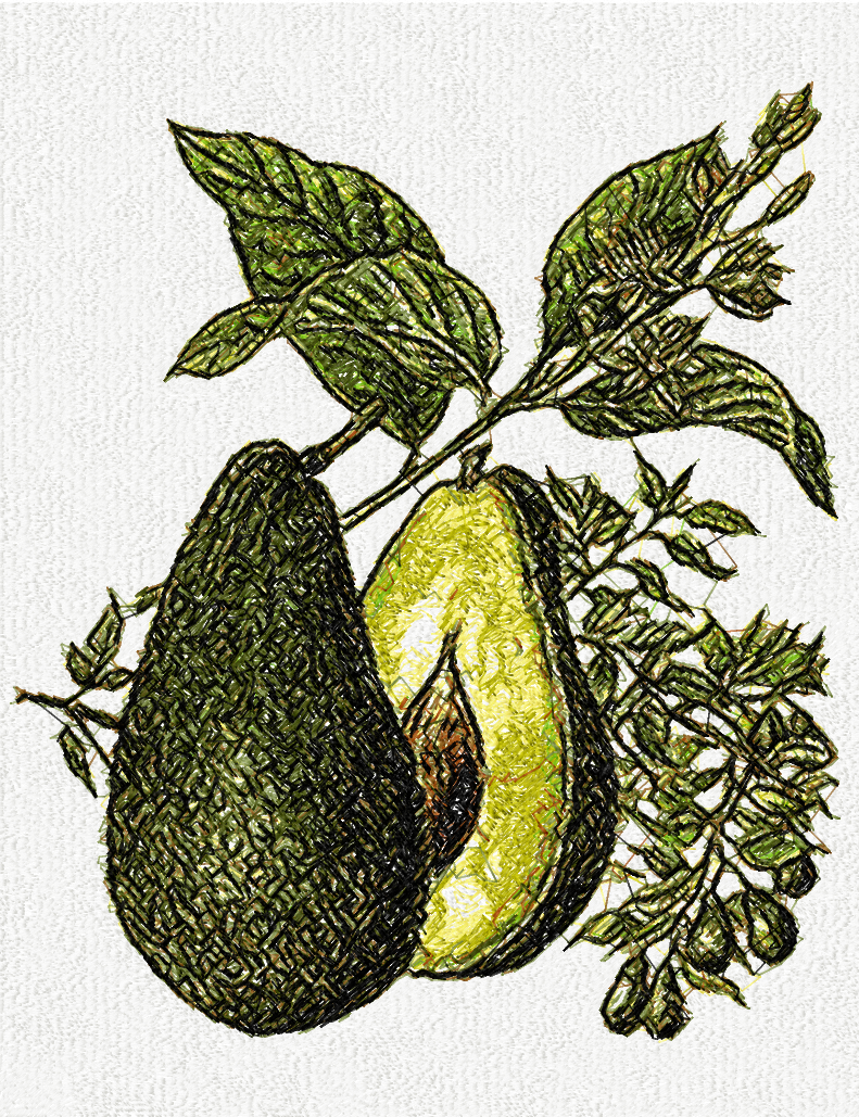 Avocado photo stitch free embroidery design