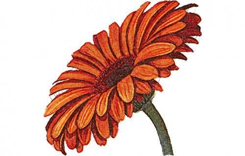 Gerbera photo stitch free embroidery design