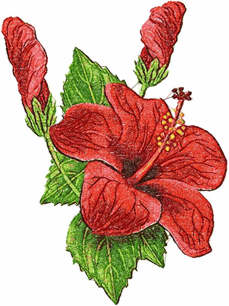 Hibiscus  photo stitch free embroidery design 3
