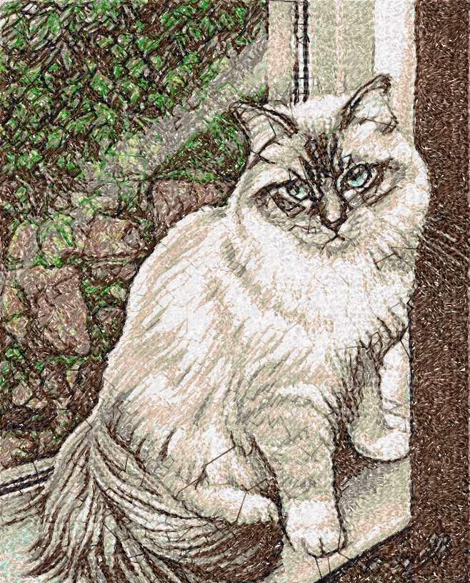Cat Photo Stitch Free Machine Embroidery Design 19 Free Embroidery