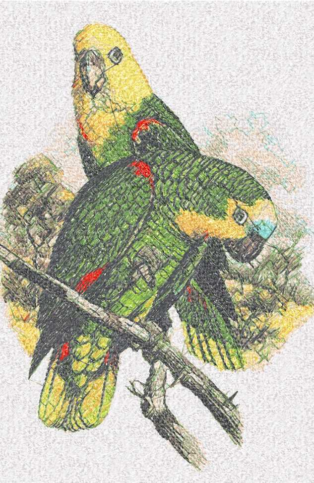 Parrots photo stitch free embroidery design