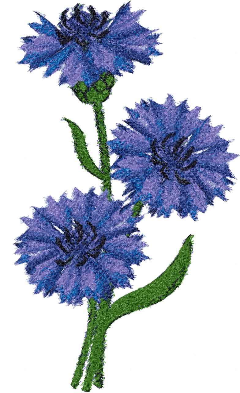 Cornflowers photo stitch free embroidery design