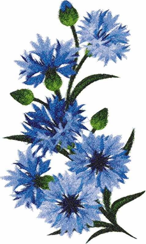 Cornflowers photo stitch free embroidery design 2