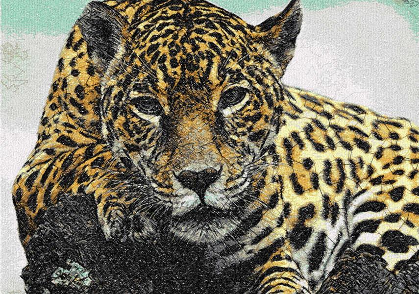 Jaguar free embroidery design