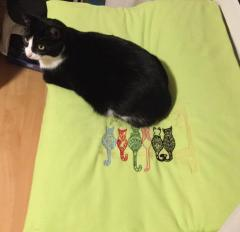 Blanket with rainbow cats free embroidery design
