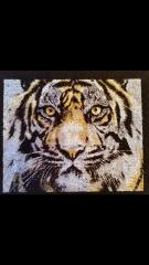 Tiger photo embroidery design finished