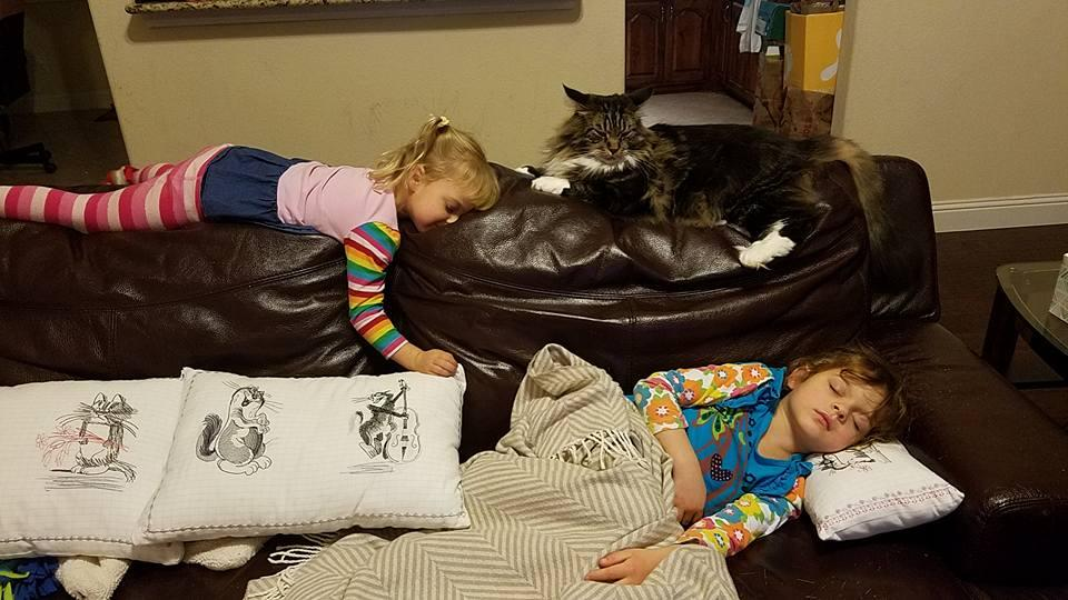 Embroidered cushions with funny cats free designs