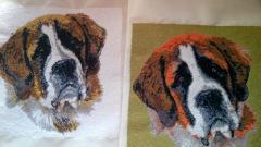 Sad saint bernard free embroidery design