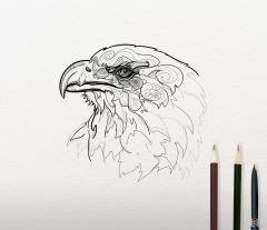 Sketch of Eagle design