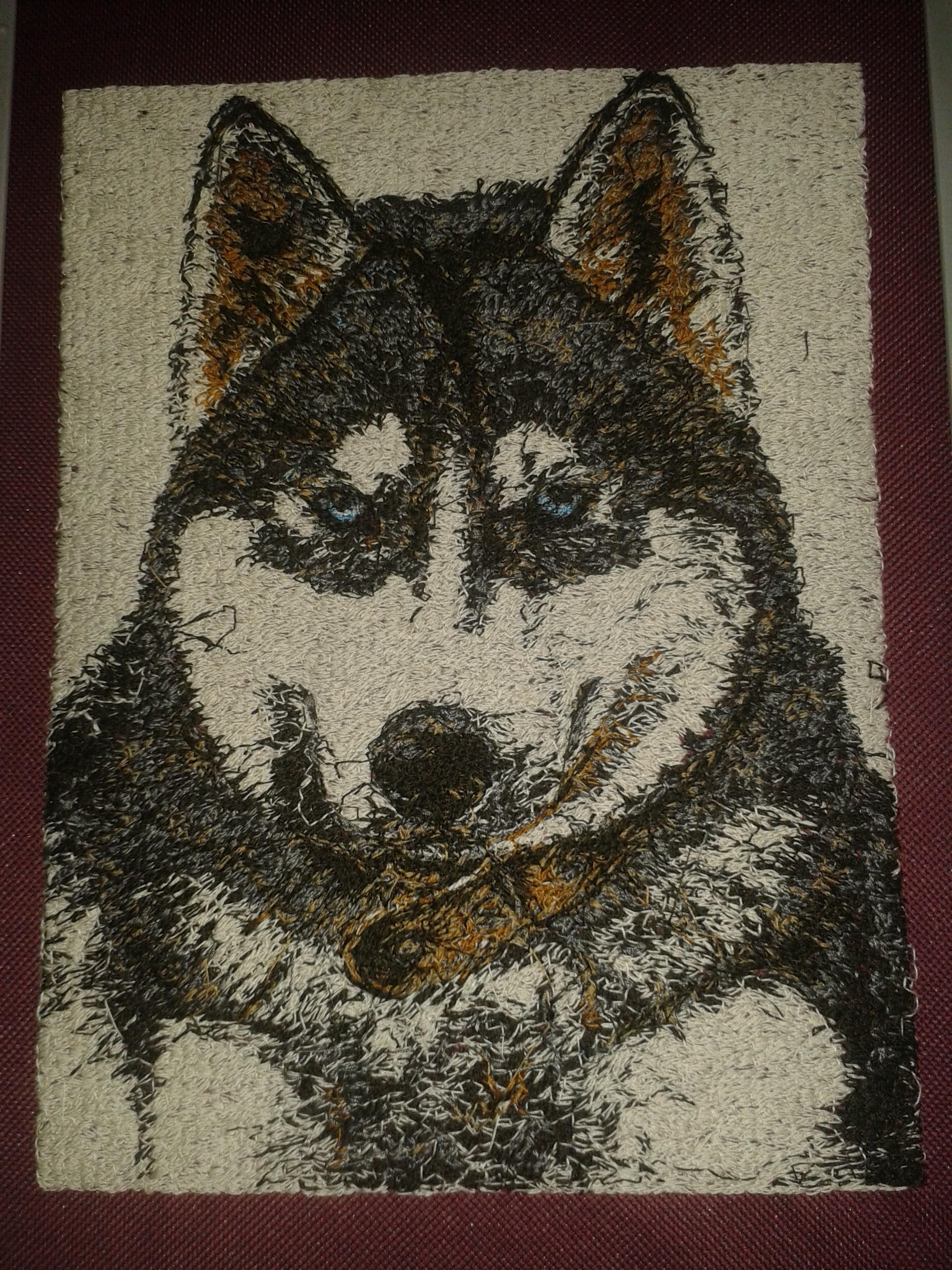 Blue eyes husky embroidery design